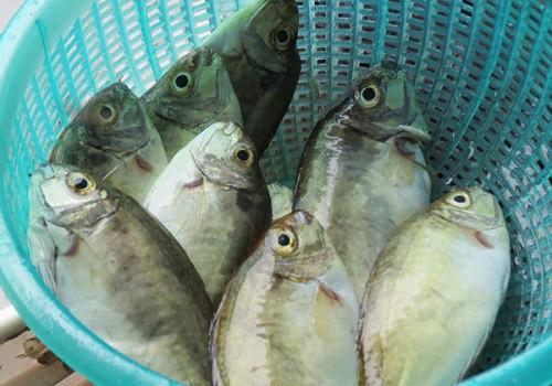 Bánh xèo cá kình làng Chuồn - Một đặc sản xứ Huế mộng mơ 1